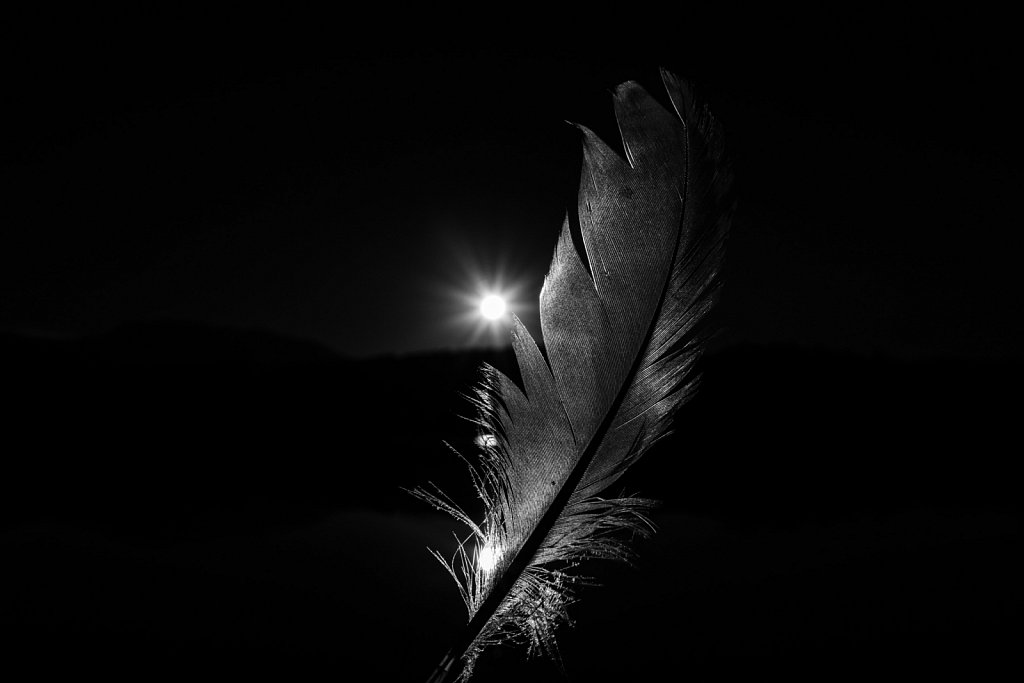 Portrait of a feather 03
