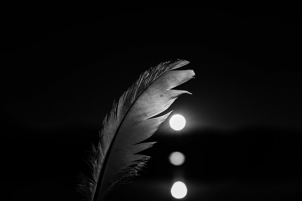 Portrait of a feather 06