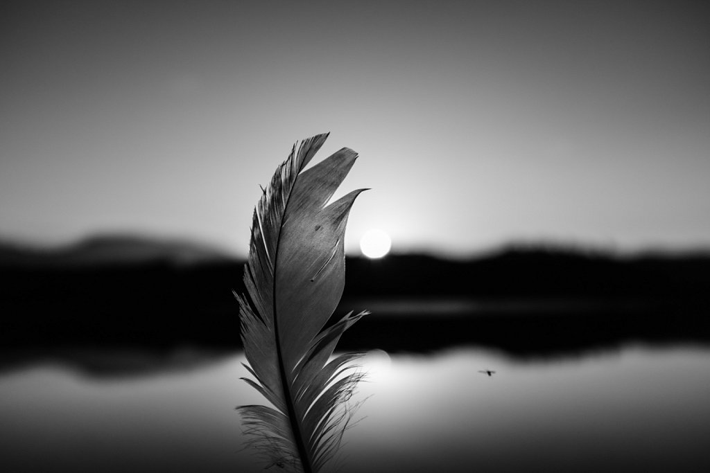 Portrait of a feather 08